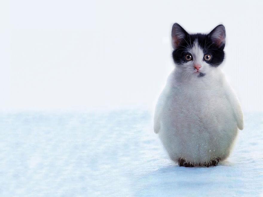 Пингви кот