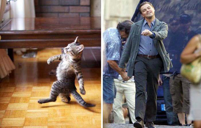 Коты как звёзды