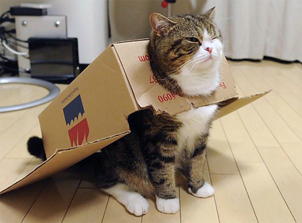Кот любящий коробки