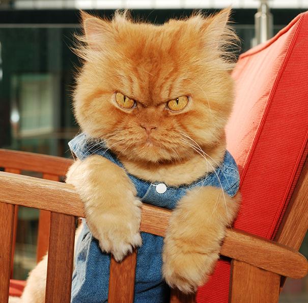 Гарфи самая злая кошка в мире