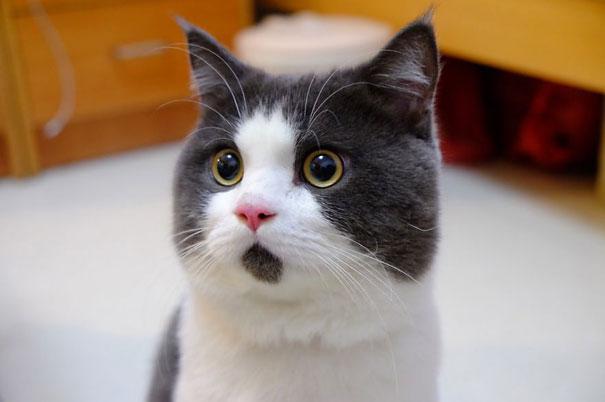 ОМГ кот