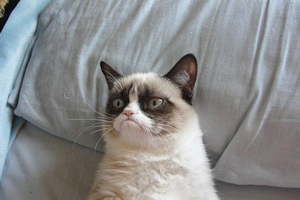 Сердитый кот
