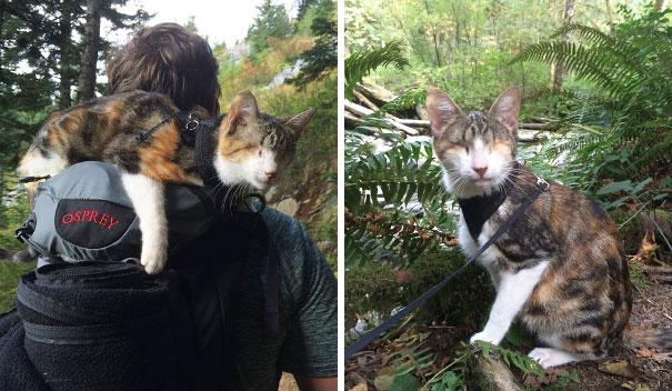 Слепой кот любящий путешествия