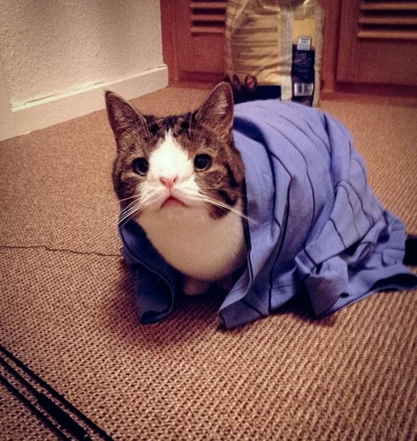 Монти, кот который родился без носового моста