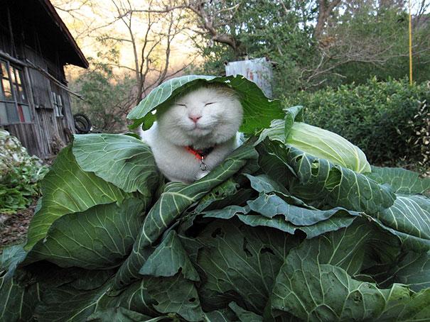 Самый счастливый кот